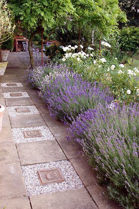 Lavender serves a multitude of purposes from being great for bees, dried for home scents, cut for flowers and finally being used as a boarder for a path. I love this cottage style garden and how they have used lavender to soften the harsh paving and path way. Love it;-)x