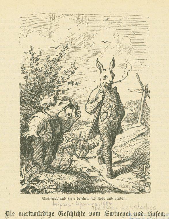 53 best der hase und der igel images on pinterest  hare