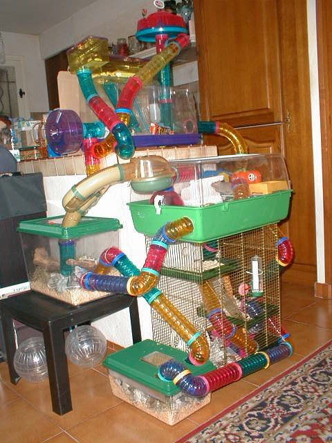 I used to have these for my hamster!!!