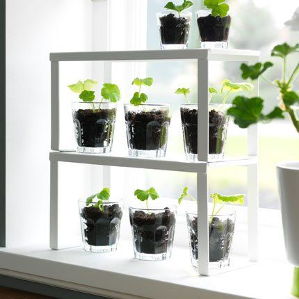 Faire pousser des plants dans des verres - Marie Claire Maison #pourchezmoi