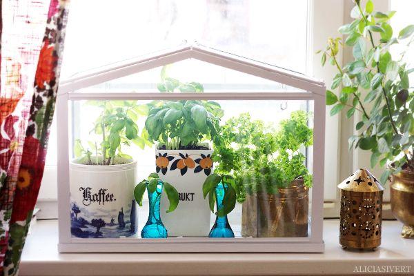 """In my miniature greenhouse"", photo by Alicia Sivertsson, 2015."