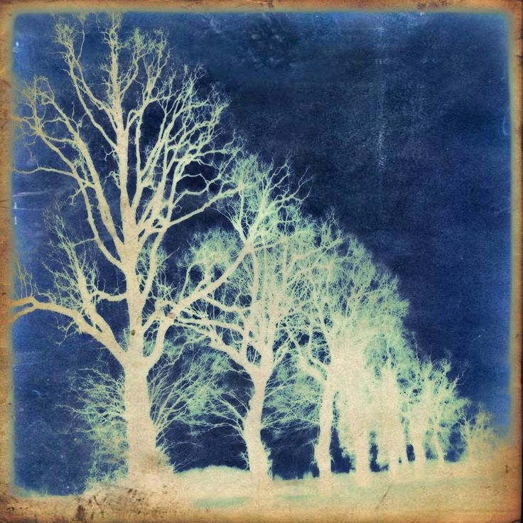 Photography & Poetry - Photo & Poésie - Cyanotype