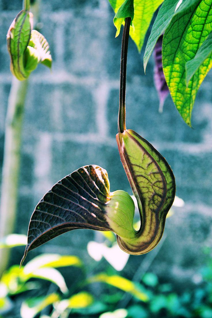 Strange flower from other planet