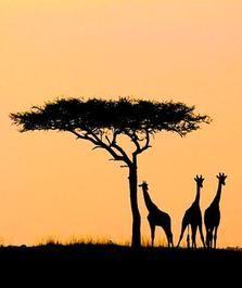 Ethiopia! Study Abroad   #GlobalGators! Visit the #UFIC website for program information: http://ufic.ufl.edu/