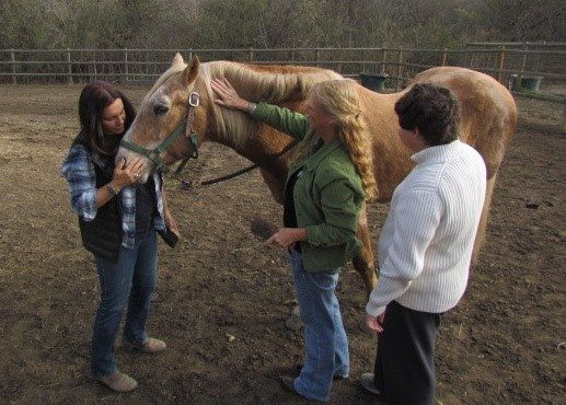 Congratulations... Sutter the Mustang Named ASPCA Horse of the Year!  http://snip.ly/8zm17