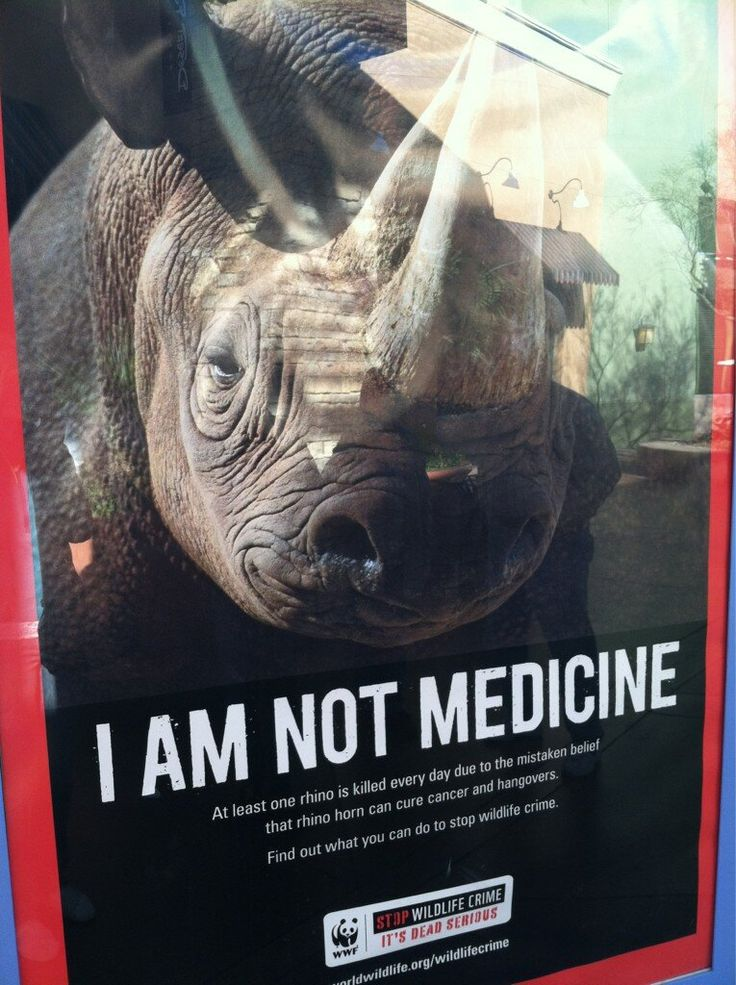 Save the Rhino  @Peggy Campbell Campbell Keeling the Rhino International @WorldRhinoDay ...