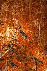 Joel Vieira - Black Flowers On Rust