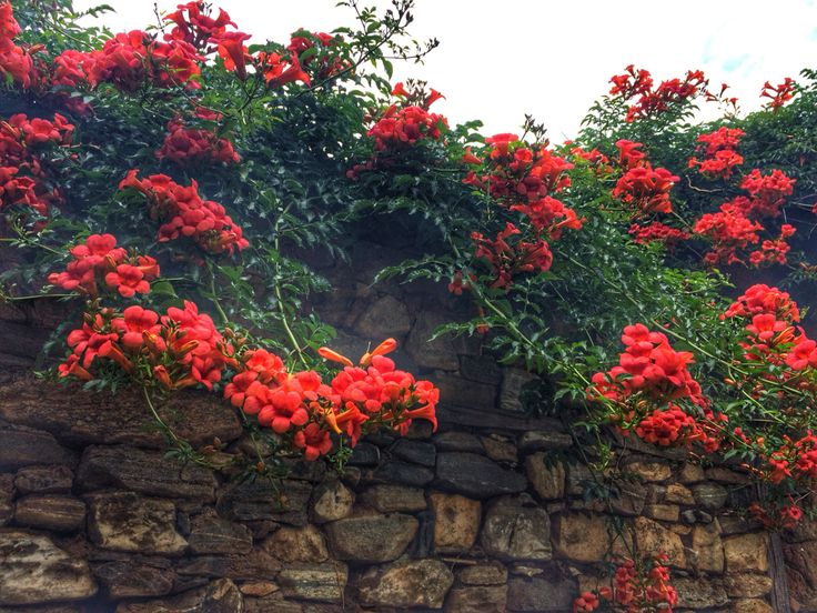 #tarihiköy #çiçek