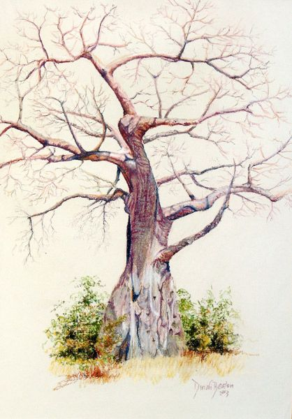 Baobab Tree, Charara - Kariba Zimbabwe. Soft pastel on paper - by Dinah Beaton