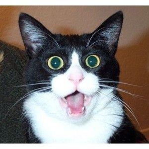 20 Pictures of Shocked Cats and Dogs
