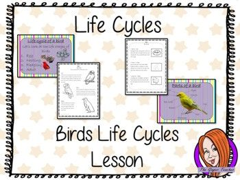 Bird Life Cycles - Complete Science Lesson This download is a complete lesson on Bird life cycles. Included: * Full lesson plan * Lesson PowerPoint * Differentiated Worksheets * Example fact file * Fact file template * Answer sheet