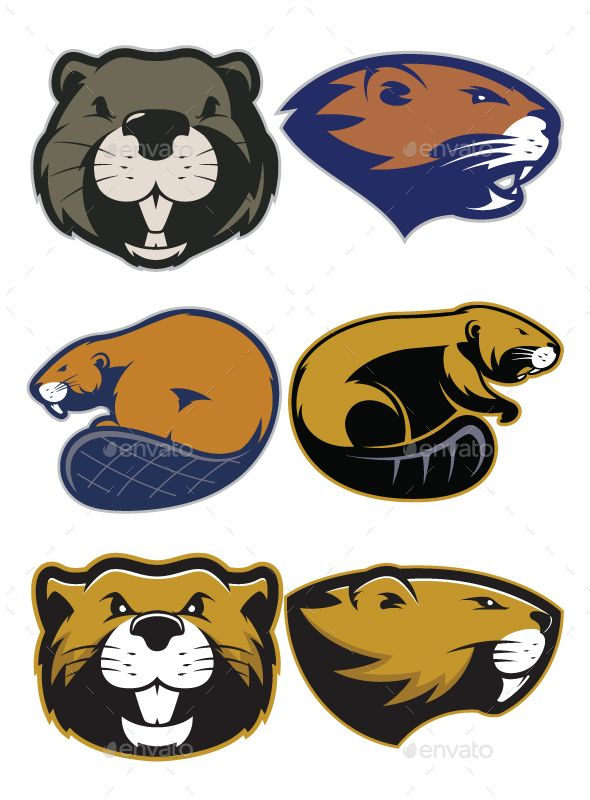 Clipart picture of beaver cartoon mascot logo character. Fully customizable in AI and EPS, Also available in JPG and PNG (High Res
