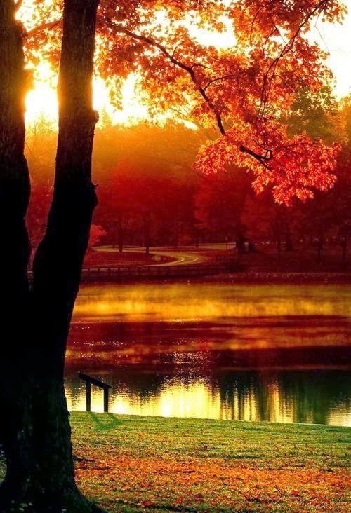 Cores de Outono...