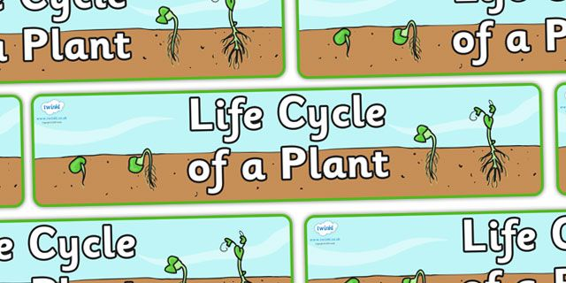 Twinkl Resources >> Butterfly Life Cycle Workbook >> Thousands of ...