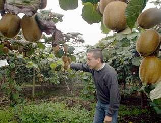 Cultivo de kiwi: cómo obtener buenas plantas en su hogar | Frutales, Plantas, Siembra | Flor de Planta