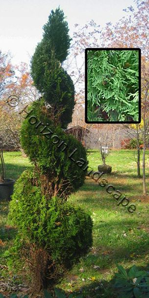 Horizon Landscape - Providing Premier Landscaping in Montgomery County and Prince George's County Maryland