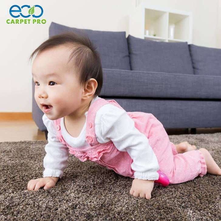 Cleaning Methods Used At Eco Carpet Pro