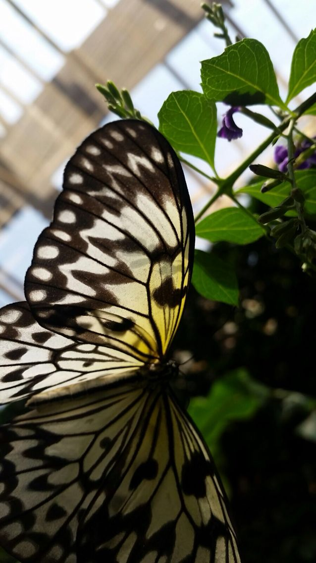 A pic I've taken at Butterfly Sanctuary Midlands South Africa
