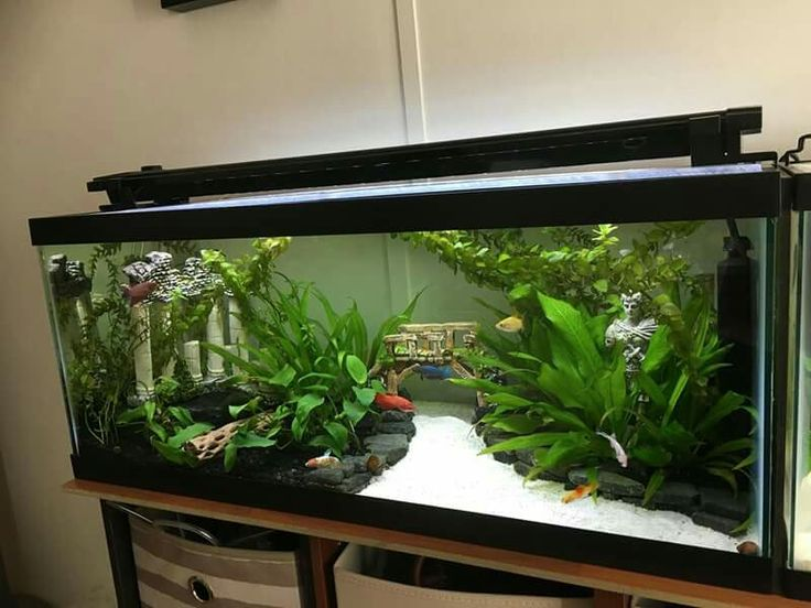 Best 25 fish tank decor ideas on pinterest fish tank for Aquarium decoration set