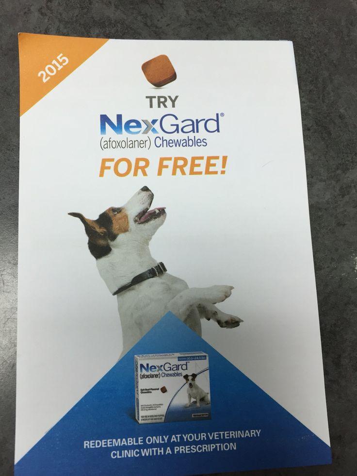 Nexgard After Dog Gets Fleas