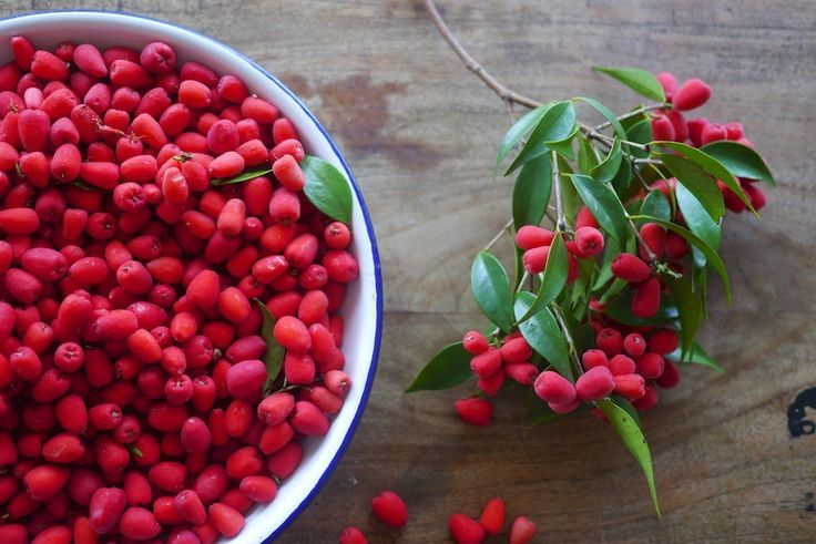 When street trees are also highly delicious. Bring on the lilli pilli everything - from gin to muffins, and cordial, and chutney...