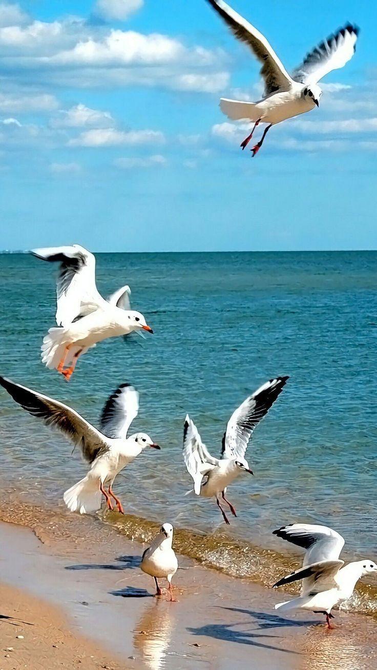 Pin By Laura On النورس والبحر Birds Painting Sea Birds Seascape Paintings