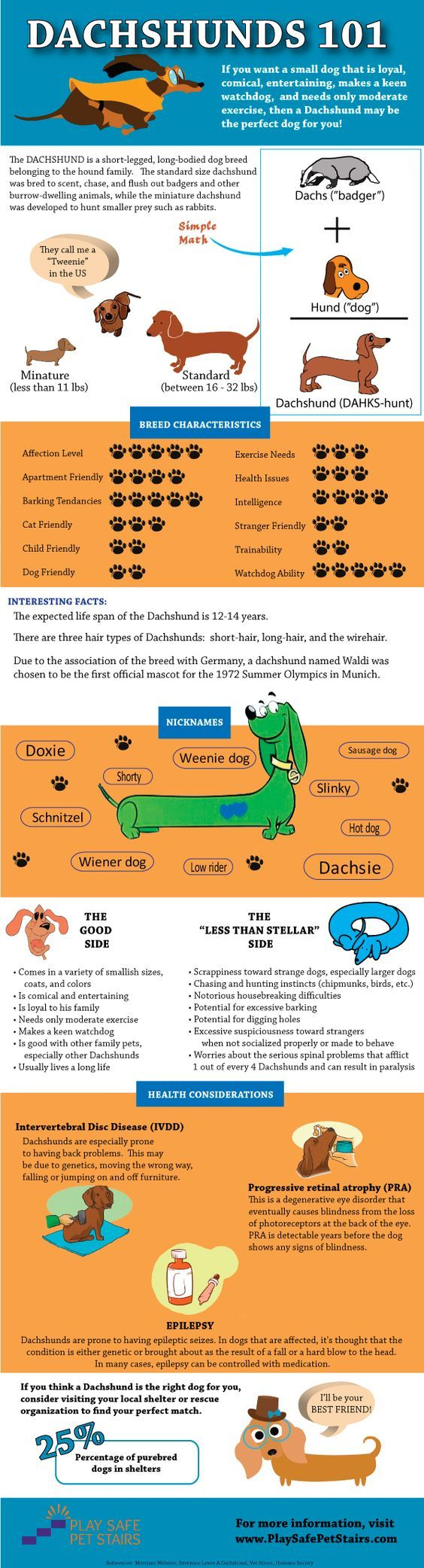 "Think a Dachshund is the perfect dog for you? This Dachshunds 101 infographic can help you decide! And, if you do decide a #Dachshund is the perfect pet for your family, make sure to get them their very own #dogstairs so they can reach you on the couch or bed (they call them ""low riders"" for a reason)!:"
