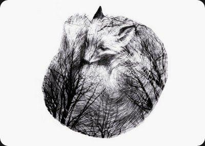 shadow fox - miss talseth illustration