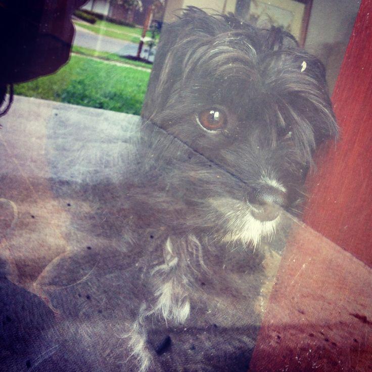 My pup.