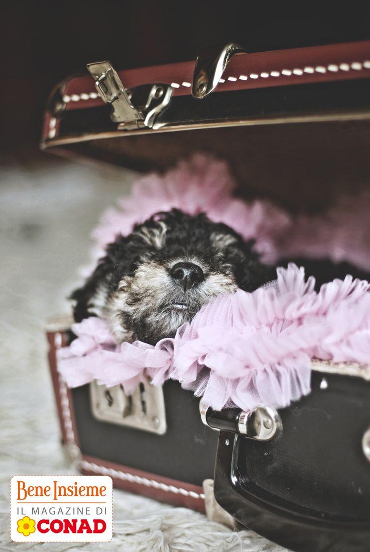 #idee per #cuccioli: se avete nel ripostiglio una vecchia #valigia rigida, ecco cosa farne: clicca sulla foto per scoprirlo!