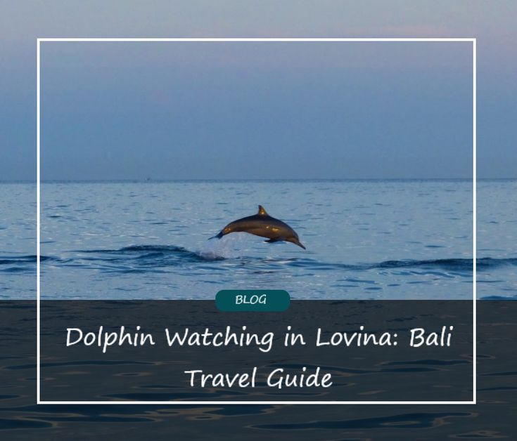 Dolphin Watching in Lovina: The Best Things to do in Bali