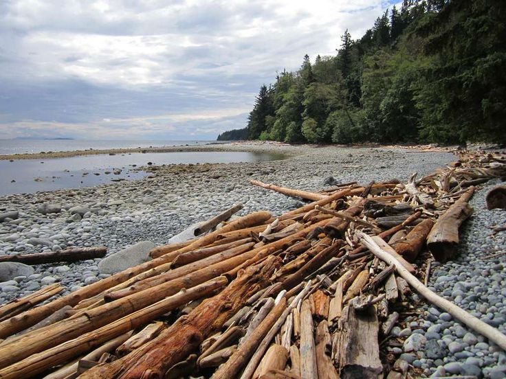 Driftwood on Wa Wa Kie Beach, Quadra Island, British Columbia, Canada.