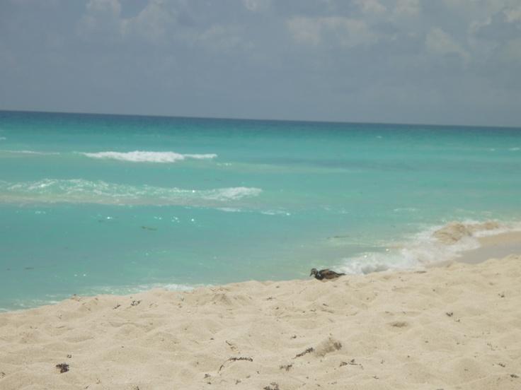 No hay como las playas de Cancun! Azúl cristalino. Hermoso lugar para vacacionar, casarse, renovar tus votos de matrimonio o simplemente descansar!. animate. www.cancunminister.com