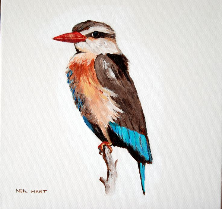 Brown Hooded Kingfisher Acrylic on canvas