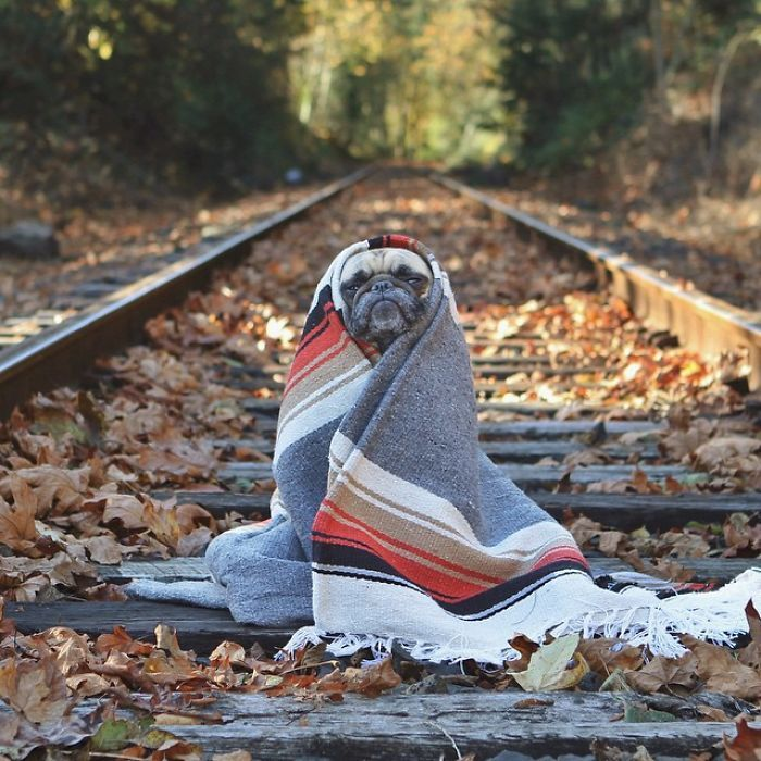 Owner Takes His Pug On Epic Adventures (15+ Pics)