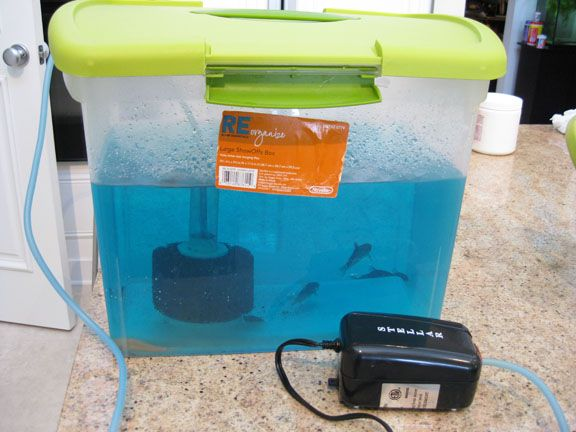 Sponge filter and air pump installed in 5 gallon plastic for 5 gallon fish tank filter