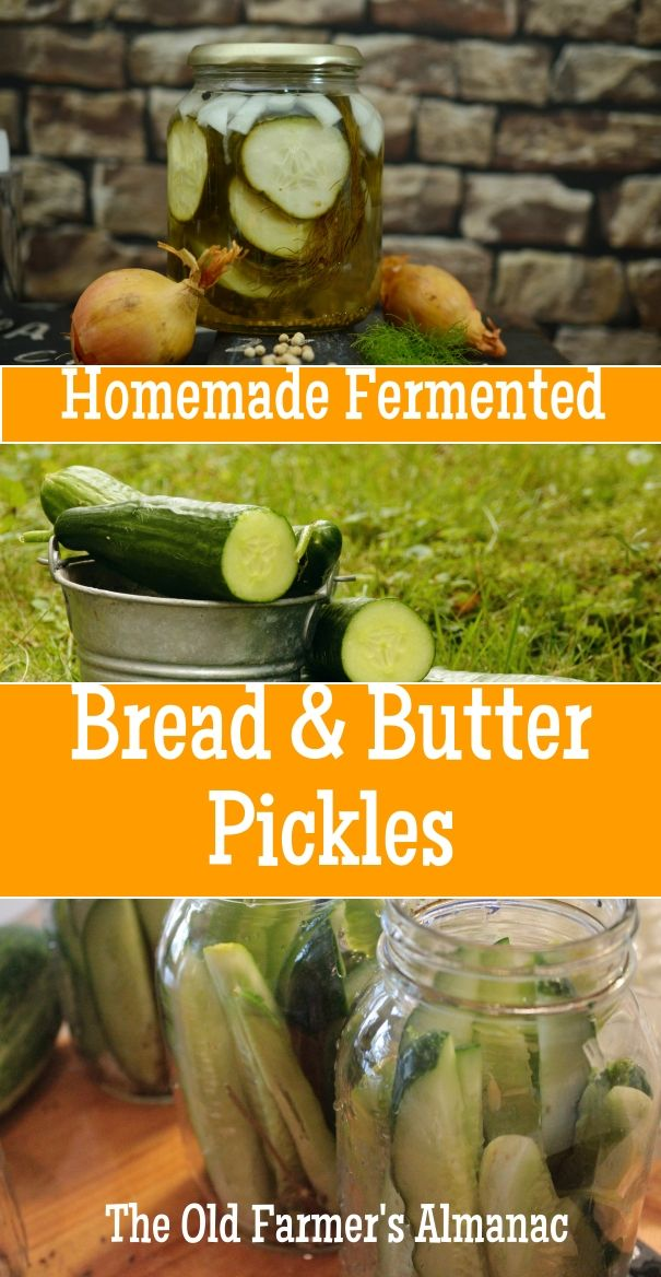 Probiotic-rich, nutritious fermentation sets these bread and butter pickles apart! Read more on almanac.com!