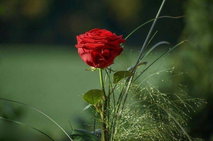 Kumpulan Wallpaper Bunga Cantik Gambar Bunga Foto Bunga Wallpaper Bunga Gambar Bunga Cantik Gambar Bunga Bergerak Gambar Bunga I Di 2020 Bunga Wallpaper Bunga Mawar