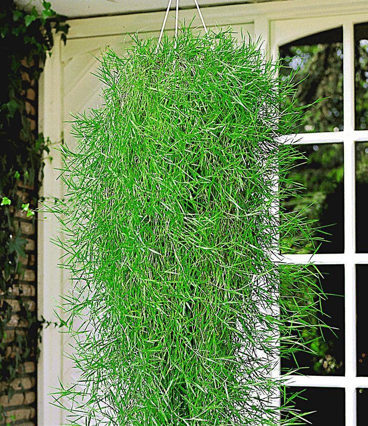 Pflanzen Topfen Kubeln Terrasse. die besten 25+ bambus balkon ...