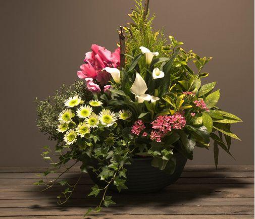 les 10 meilleures images propos de toussaint fleurs et plantes sur pinterest vase coup. Black Bedroom Furniture Sets. Home Design Ideas