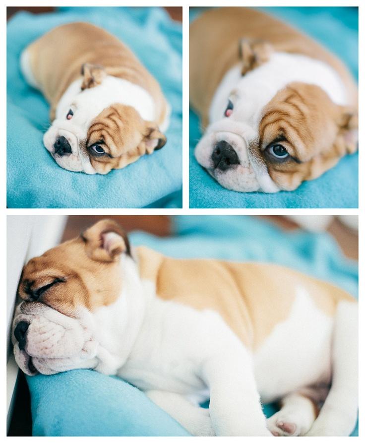 dog tired  I  Petra Veikkola Photography