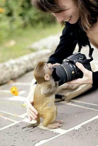 piccola scimmia con macchina fotografica
