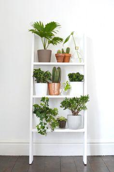 Vous cherchez une idée originale pour mettre vos plantes plantes ? L'étagère échelle murale sera parfaite, tendance et qui ne pendra que peu de place.