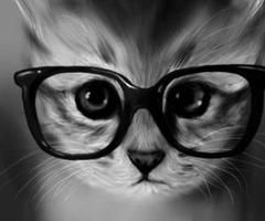 Hip Cat <3: Hipster Cat, Kitty Cat, Cat Eye, Smarty Pants, Black And White, Cute Kitty, Kitty Kat, Geek Chic, Animal