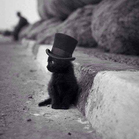 "steampunktendencies: ""Подпись это!  #steampunktendencies #steampunk #art #cat…"