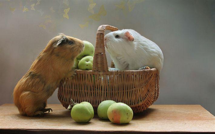Download wallpapers guinea pigs, cute animals, fruit basket, apples