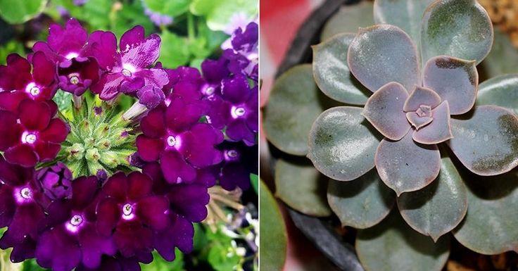 5 plantas PERFECTAS para el verano