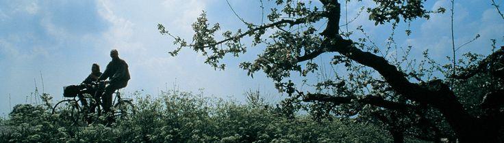 De Betuwe is een streek in Gelderland, gelegen tussen de rivieren de Waal in het Zuiden en de Lek in het Noorden. De Betuwe is ingesloten tussen de provincies Noord-Brabant, Utrecht en aan Zuid-Holland in het Westen. Door het midden van de Betuwe stroomt een 3e rivier, genaamd de Linge. Deze rivier en de directe omgeving trekken veel toerisme, onder meer vanwege de fruitboomgaarden langs de Linge en de mogelijkheid tot kanovaren tussen Geldermalsen en Leerdam.