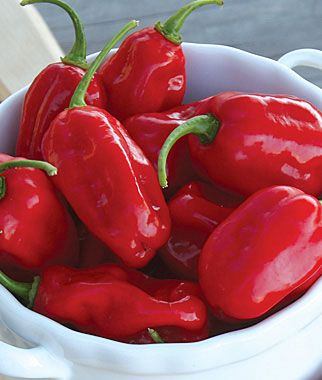 Want a Habanero without the major heat?  Bite into this #hotpepper with confidence.