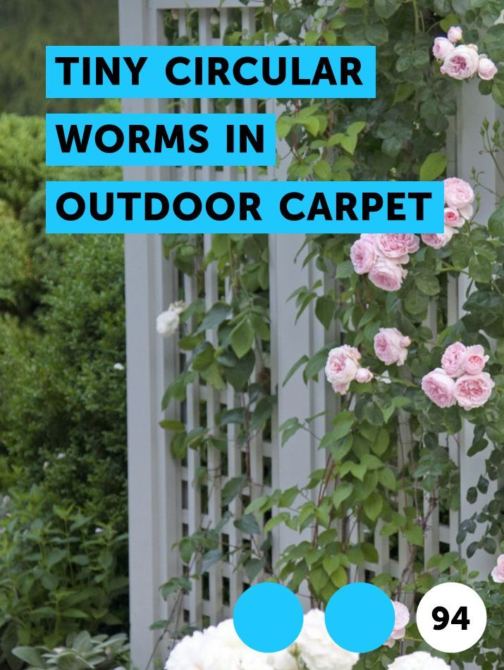 Tiny Circular Worms in Outdoor Carpet | Pests, Weeds & Problems